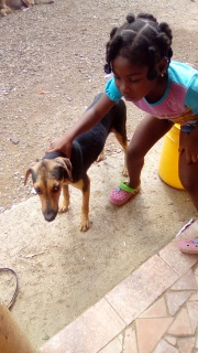 Panama Dog Rescue will cover the balance to Spay Panama