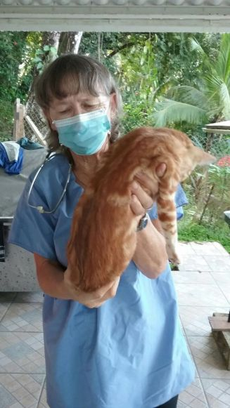 This is our vet Sandy carrying one of the very sleepy patients!
